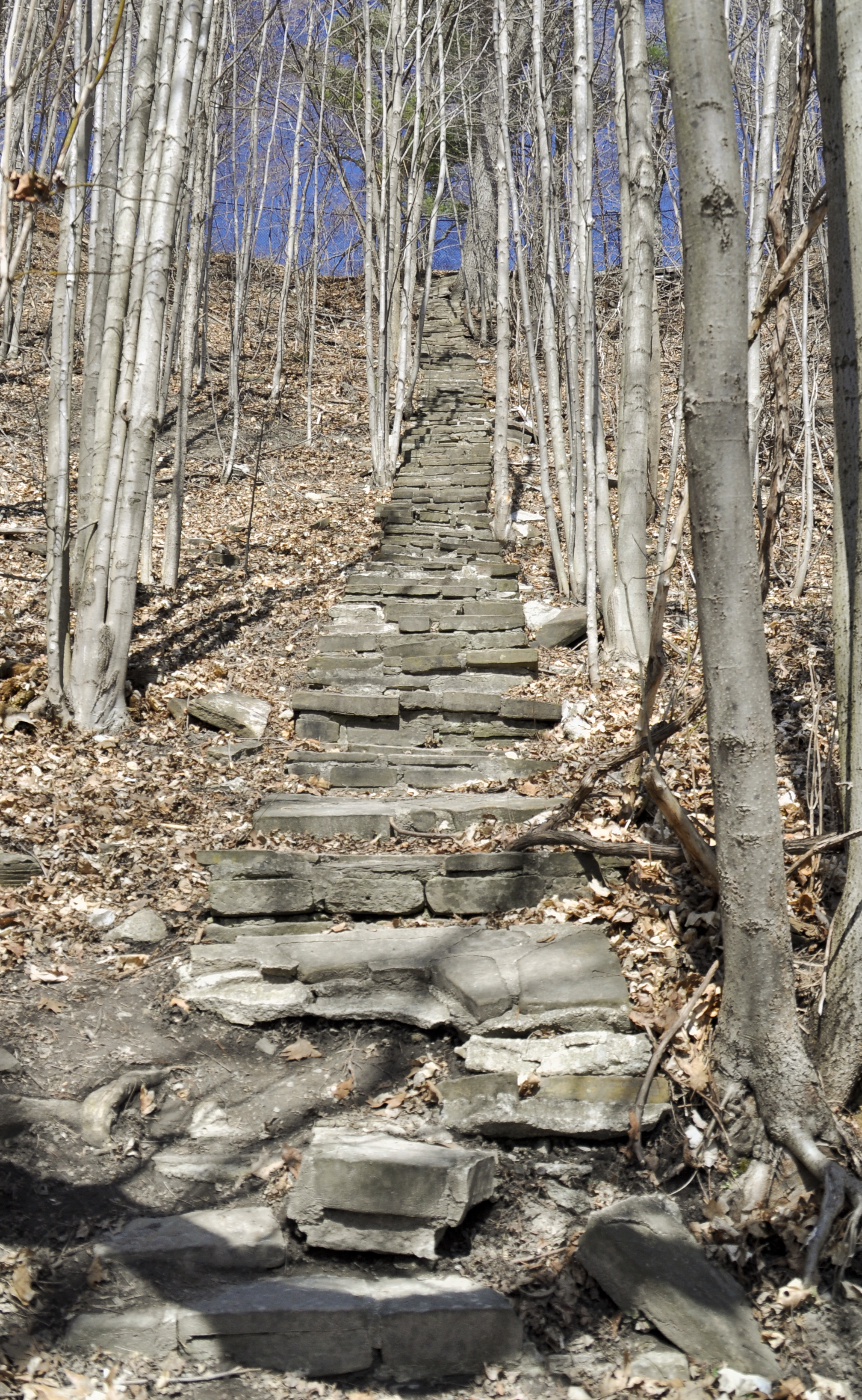 Trails in Mississauga - Riverwood Conservancy