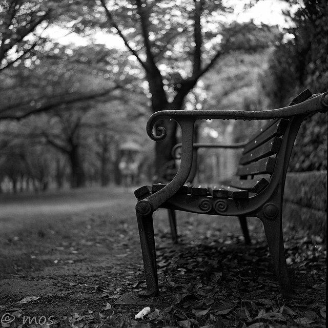 another bench in the rain