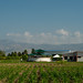 Haiti: Cutting-edge Agricultural Center