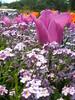 Photo:Flower Center ,Hyogo Kasai By 5thLuna