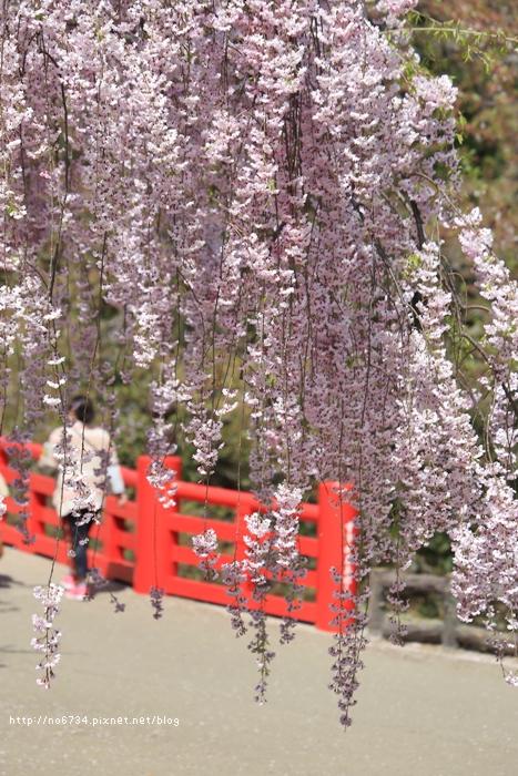 20140502_AomoriSakura_1846 f
