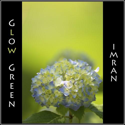 flowers newyork green nature suffolk nikon framed longisland imran 2010 d300 patchogue imrananwar