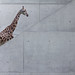 A Natural History of the Giraffe