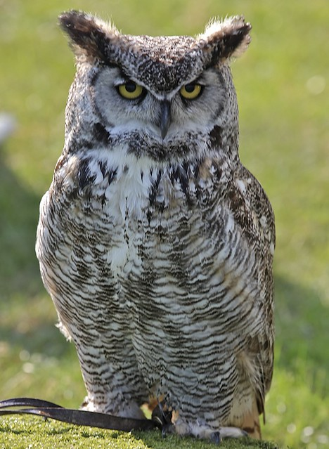 Wise old Owl | Flickr - Photo Sharing!