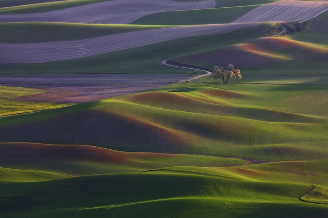Alone - Palouse Hills, Steptoe Butte, Colfax WA