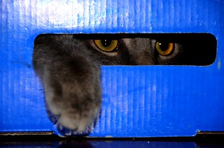 Curiosity = cat + box