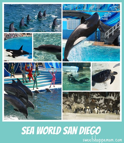 Sea World San Diego Spriing Break 2014 trip