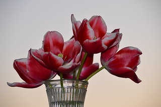 The gathering - tulips 2014