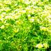 2003_0330_49_GGPark_Flower