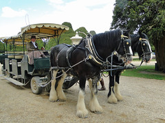 cart(0.0), vehicle(1.0), pack animal(1.0), coachman(1.0), horse harness(1.0), horse and buggy(1.0), land vehicle(1.0), carriage(1.0),