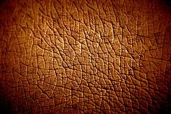 Hippopotamus Skin texture