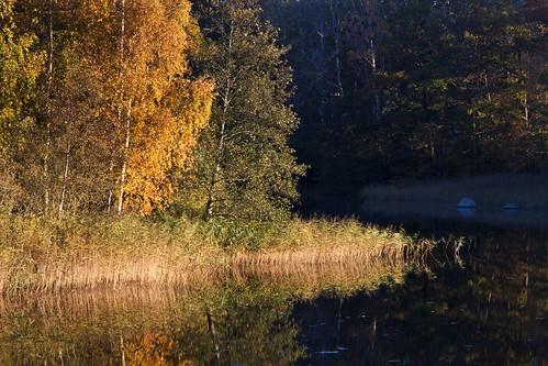 autumn trees reflection fall river sweden sverige stångån östergötland canonefs1785mmf456isusm bjärkasäby canoneos7d