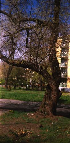 Ferencváros 2012 március_0052