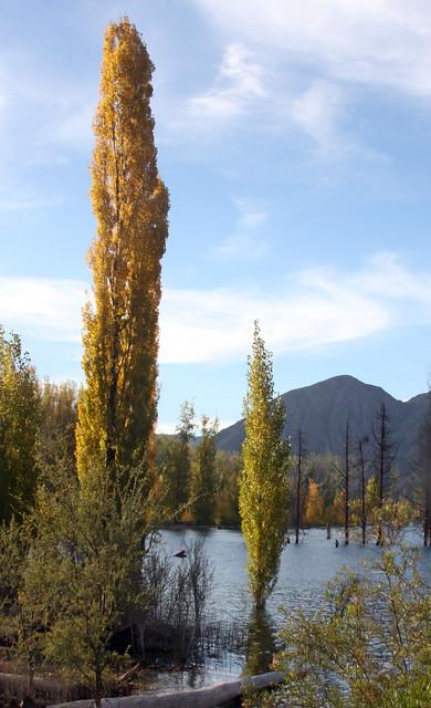 Mendoza 18