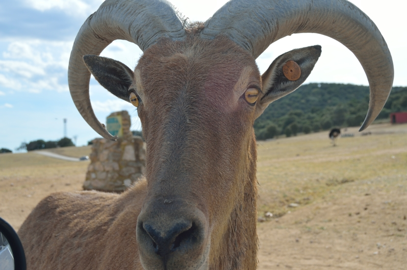 lara-vazquez-madlula-blog-style-inspiration-safari