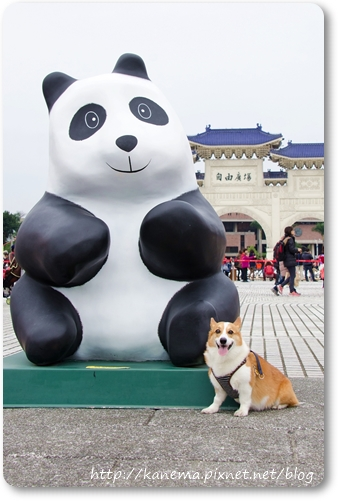 DOG_3692