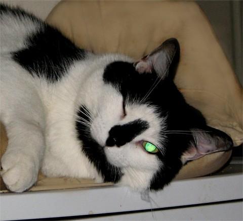 猫咪可爱wink表情包