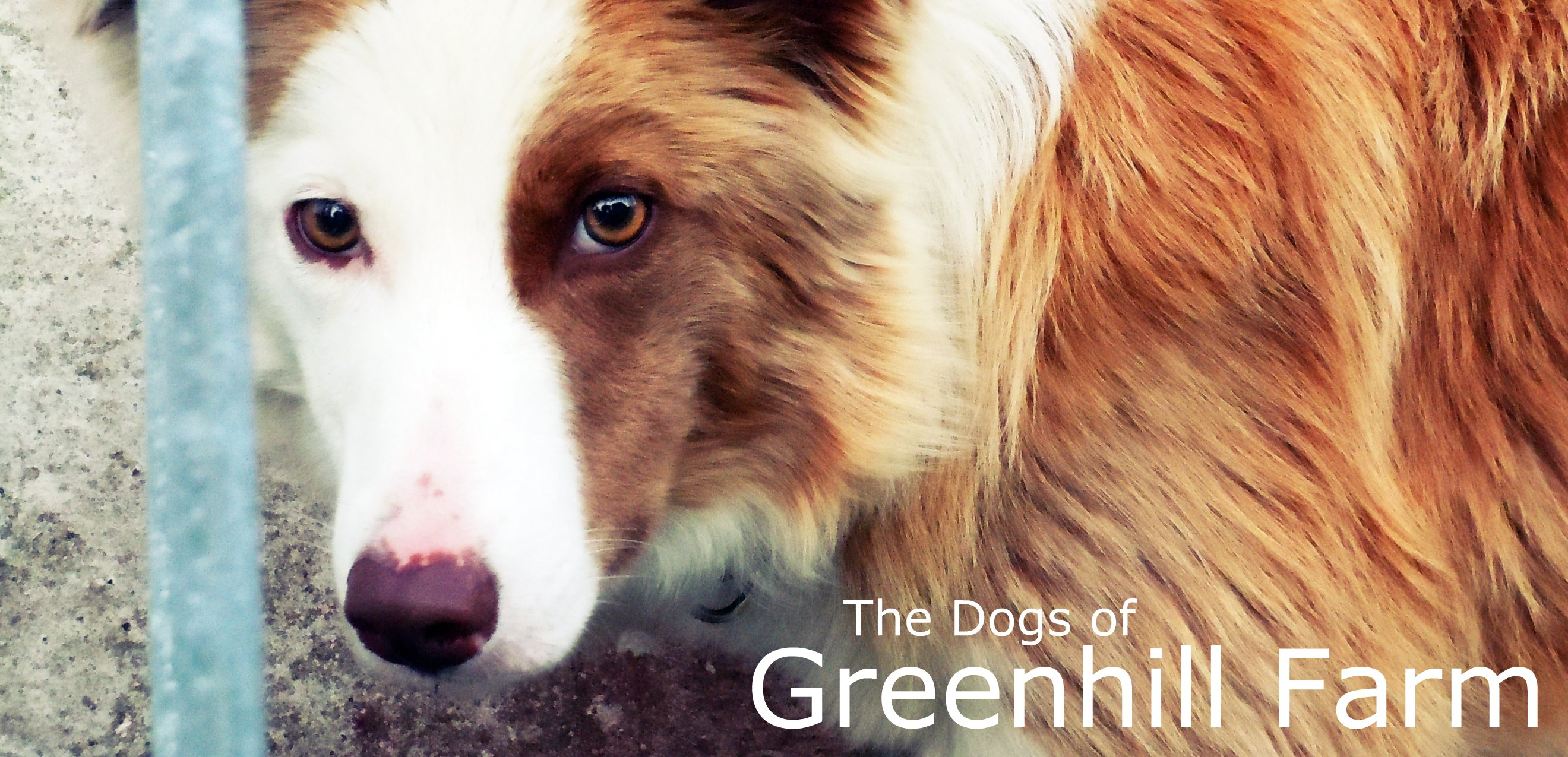 The Dogs of Greenhill Farm