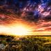 """Storm light sunset by Scott Stringham """"Rustling Leaf Design"""""""