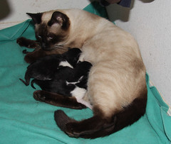 nursing new kittens