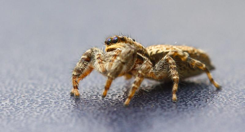 Petite araignée 7227365534_127285ebd2_c