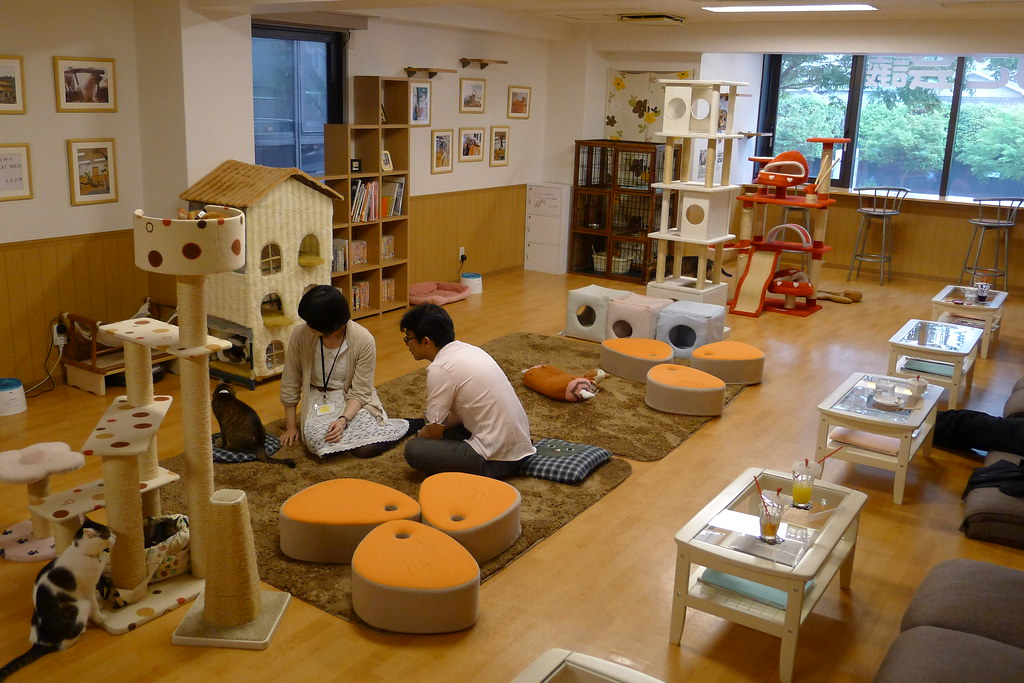 Nekokaigi Cat Cafe