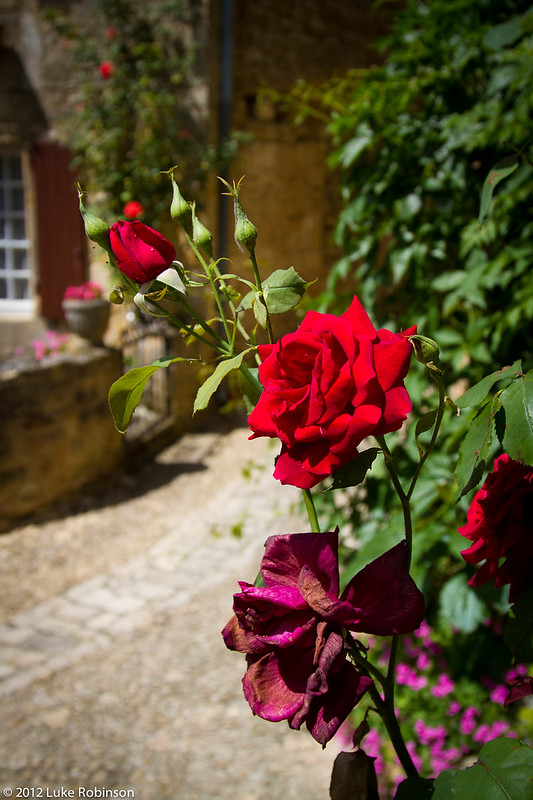 Roses of Beynac-et-Cazenac