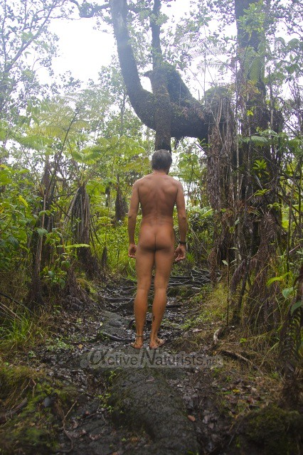 naturist 0004 Ka-hau-a-Le'a tree fern trail, Hawaii, USA