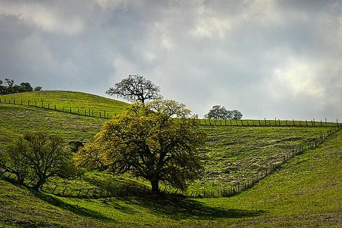 california trees weather clouds landscape bluesky sunol landscapesky sunolca
