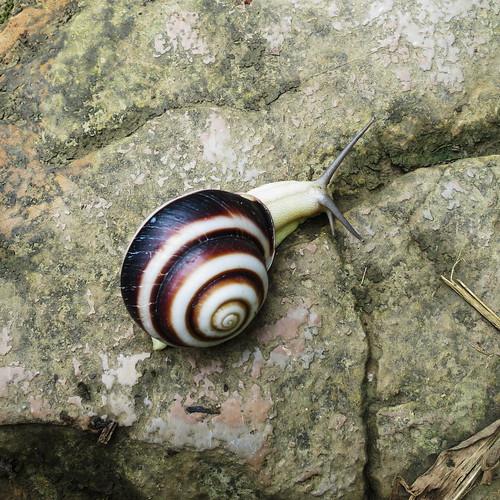20140507_Vietnam_snails-01