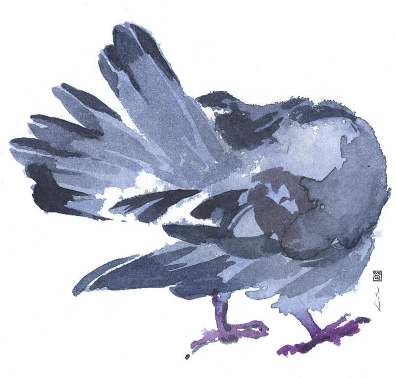 Pigeon_Preening_1_sm