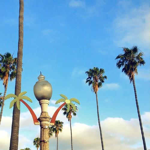 OB Palm Trees
