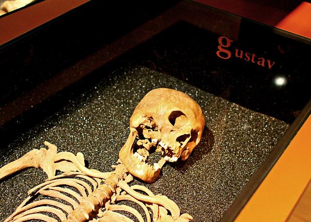 dead gustav