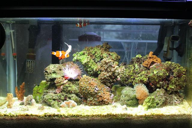10G Nano Reef