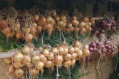 gourd(0.0), vegetable(1.0), onion(1.0), shallot(1.0), produce(1.0), food(1.0),