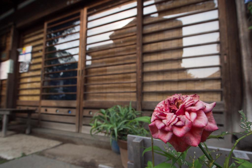 店先のバラ 2012/06/24 OMD40253