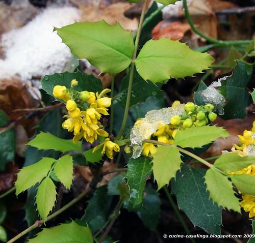 Zion RiversideWalk Blumen Eis