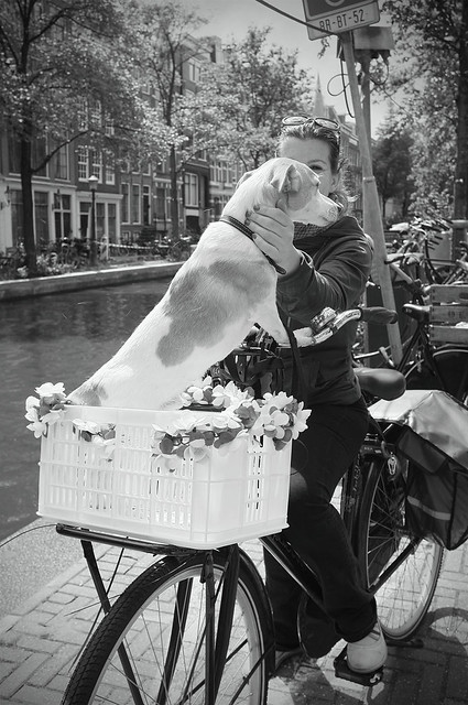 Dog in Basket patting