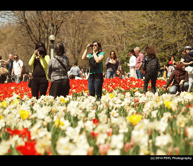 Photographers at Tulip Festival