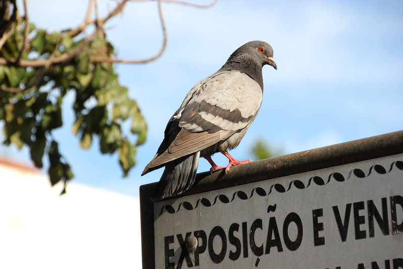 Madeira, Funchal 2014 + ostokset 183