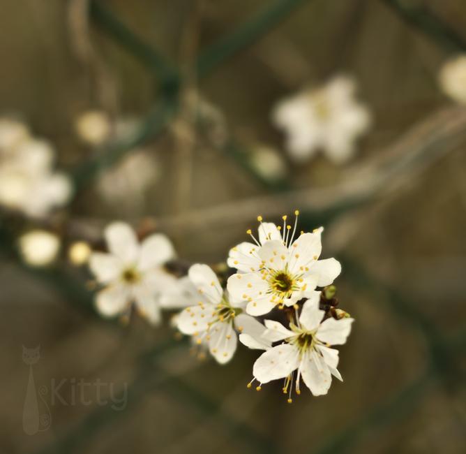 HFF - Blossom Version