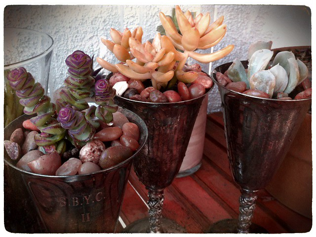 DIY: Succulents In Tarnished Silver