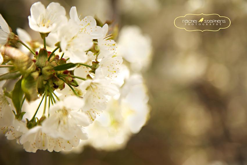 Blossom05-2