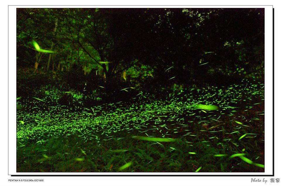 K5首次拍攝螢火蟲