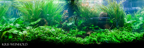 75G Aquascape for Angels
