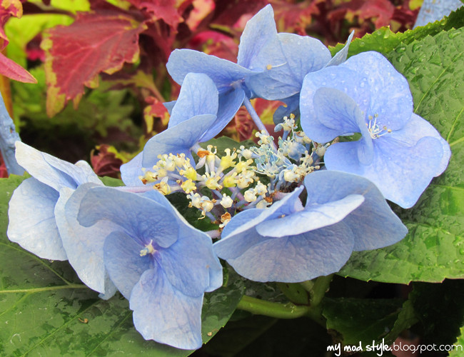 krohn blue flwers