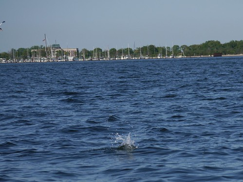 Tern splashdown! by bkfrogma