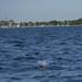 Tern splashdown!