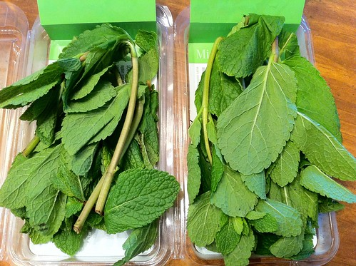 Two Packs of Fresh Mint