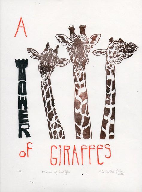 giraffes004